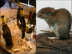 Bihar Mice Drunk Lakhs Litre Liquor