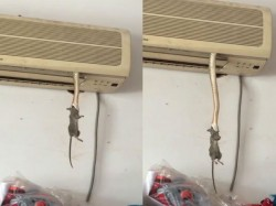 Snake Comes From Ac Grab The Rat