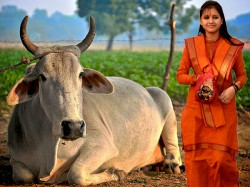 Sadhvi Saraswati Threats Those Who Eat Beef As Status Symbol Should Be Hanged