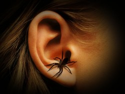 Live Spider Crawls Of Bangalore Woman S Ear After She Goes To Hospital In Pain