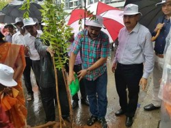 Mumbai S Bjp Mla Watering Plants During Rainfall Catches Social Media Attention