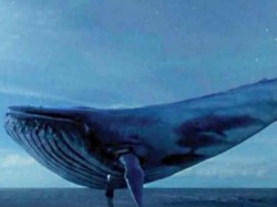 A Student Committed Suicide Victim The Blue Whale Game