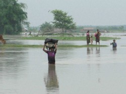 Behind Bengal Flood Drugs Cattles Are Being Smuggled Into Bangladesh More Than Ever