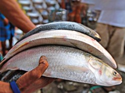 Bangladesh Gets The Gi Patent Ilish