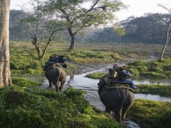 Elephant Safari Starts At Bengal Safari Park Near Siliguri West Bengal