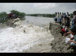Rats Have Caused The Flood The State Claims Bihar Miniters