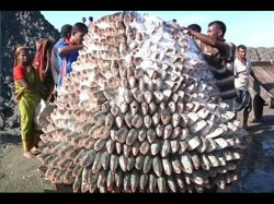 Fish Markets And Around Kolkata Is Full Hilsa