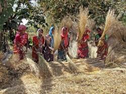 Bjp Targets Self Help Groups To Attract Women Voters Gujrat