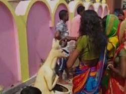 Women Worshipping Kangaroo Dustbin Chat Puja Goes Viral Social Media