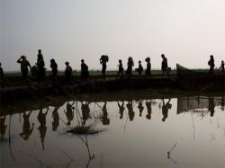 Rohingyas Spreads Throughout Bangladesh