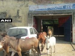 Uttar Pradesh Police Arrest Donkeys Destroying Jail Property