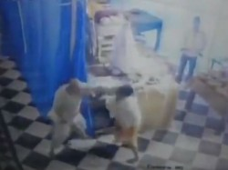 Two Shadhus Clash At Radha Rani Temple Barsana Uttar Pradesh