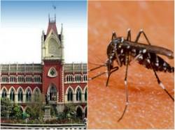 Declare Dengi Notifiable Disease Calcutta Hc Orders West Bengal Government