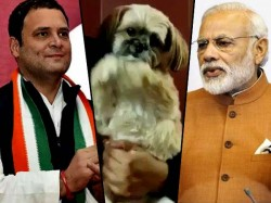 Gujrata Election Prideiction A Dog Caught Video Goes Viral On Social Media