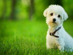 Know Which Pet Animal Is Lucky Home According Vastu Shastra