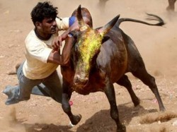 Year Old Gored Death During Jallikattu Festival Madurai