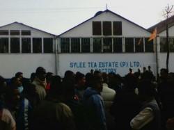 Again Two Tea Garden Closed North Bengal