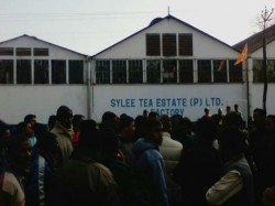 Again Two Tea Garden Closed North Bengal