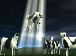 Viral Video Cow Kidnapping Is Hovering Social Media