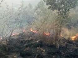 Fire Breaks In Tamilnadu S Theni Forest Kurangani Hills
