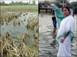 Mamata Banerjee S Government Provides Financial Assistance Flood Affected Farmers