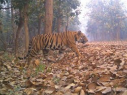 What Is The Destination The Tiger Lalgarh