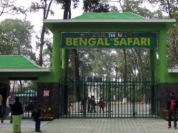 Leopard Safari Start At The North Bengal Wild Animals Park From Poila Boisakh