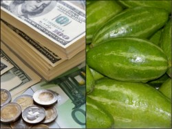 Passenger Is Arrested The Customs Official While Trying Smuggle Dollars And Euro