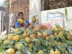 Tripura Signs Mou With Spicejet Merchandise Ltd Export Pineapple