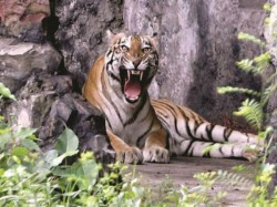 Kolkata Municipal Authorities Questions One From Kolkata Zoo Rotten Meat Case