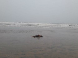 Body Two Youth Are Recovered From Digha Sea Beach On Monday Morning
