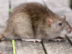 Mice Chew Up Cash Amounting Rs 12 38 Lakh From Inside An Atm Assam S Tinsukia