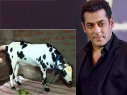 A Goat Named Salman Khan Goes On Sale Expected Fetch Rs 5 Lakh On Eid Al Adha