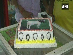 People Lucknow Are Preparing Celebrate An Eco Friendly Bakrid