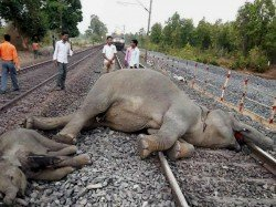 Three Elephants Are Died Train Accident At Jhargram