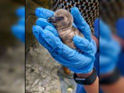 The First Penguin Born India On The Independence Day Has Died