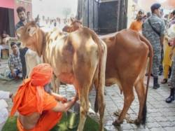 Uttarakhand Assembly On Wednesday Recommended Declaration Cow As Rashtra Mata