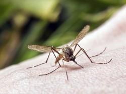 Expert Doctor S Advice On Dengi