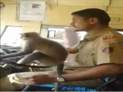 Ksrtc Removes Driver From Duty Letting Monkey Take The Wheel