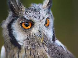 Ahead Telangana Polls Candidates Are Ordering Owls Do Black Magic To Oppositions