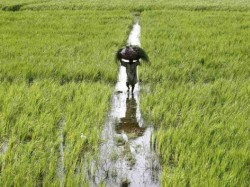 Government Plans Bonus On Msp Every Farmer End Subsidy Loan Waiver
