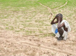 Global Warming Likely Reduce Crop Production Heavily Up Rajasthan Bengal