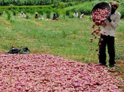 Maharashtra Farmer Spent Rs 2 Lakh On Onions Earned Just Rs