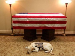 George H W Bush S Service Dog Stays His Casket