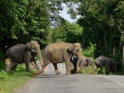 Elephants Kills The Young Man At Shanboni West Midnapur