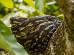 Woman Gets Snakes Bite Toilet Australia