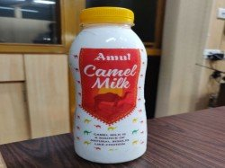 Amul Launches Camel Milk Select Gujarat Markets