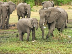 Panic Of Elephants Has Raised The Thinking Of The District Administrations In The State