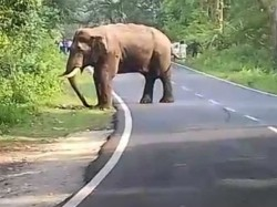Elephant Obstructed Traffic On Nh 31 In Lataguri