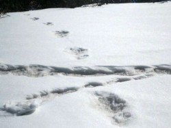 What Is Yeti Indian Army Releases More Picturs Of 32 By 15 Inch Footprint